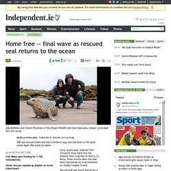 final wave as rescued seal returns to the ocean