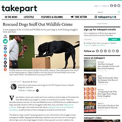 Rescued Dogs Sniff Out Wildlife Crime