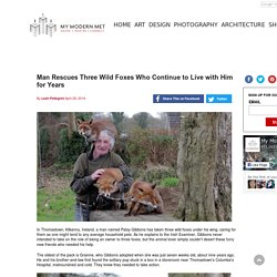 Man Rescues Three Wild Foxes Who Continue to Live with Him for Years