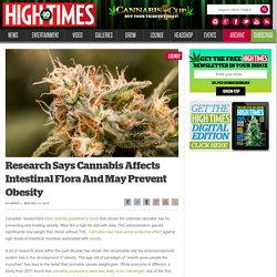 Research Says Cannabis Affects Intestinal Flora And May Prevent Obesity