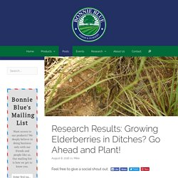 Research Results: Growing Elderberries in Ditches? Go Ahead and Plant! - Bonnie Blue Farms and Nursery