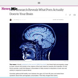 New Research Reveals What Porn Actually Does to Your Brain - Mic