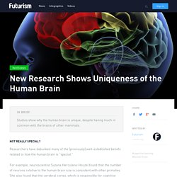 New Research Shows Uniqueness of the Human Brain