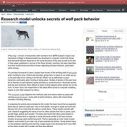 Research model unlocks secrets of wolf pack behavior