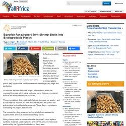 Egyptian Researchers Turn Shrimp Shells into Biodegradable Plastic