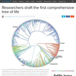 Researchers draft the first comprehensive tree of life