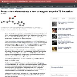 Researchers demonstrate a new strategy to stop the TB bacterium