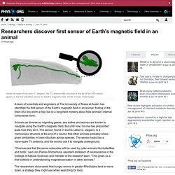 Researchers discover first sensor of Earth's magnetic field in an animal