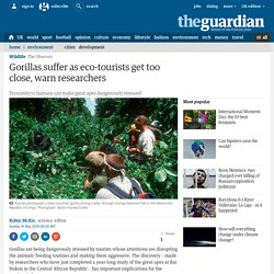 Gorillas suffer as eco-tourists get too close, warn researchers