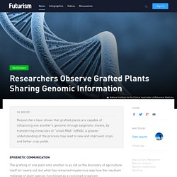 Researchers Observe Grafted Plants Sharing Genomic Information