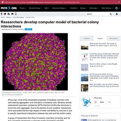 Researchers develop computer model of bacterial colony interactions