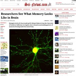 Researchers See What Memory Looks Like in Brain
