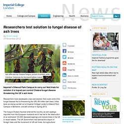 IMPERIAL COLLEGE LONDON 07/11/12 Researchers test solution to fungal disease of ash trees