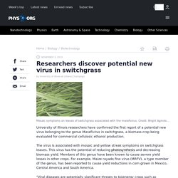 PHYSORG 03/11/10 Researchers discover potential new virus in switchgrassUniversity of Illinois researchers have confirmed the fi