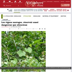 VITISPHERE 05/02/15 Flavescence dorée : les vignes sauvages, réservoir aussi dangereux que silencieux