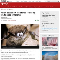 BBC 09/03/16 Asian bats show resistance to deadly white-nose syndrome