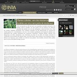 INRA 08/03/18 Plantes cultivées : vers des résistances durables aux virus sans perte de rendement