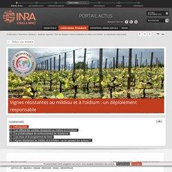 INRA 27/01/17 Vignes résistantes au mildiou et à l'oïdium : un déploiement responsable