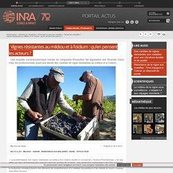 INRA 28/11/16 Vignes résistantes au mildiou et à l'oïdium : qu'en pensent les acteurs ?