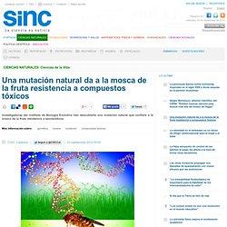 Una mutación natural da a la mosca de la fruta resistencia a compuestos tóxicos