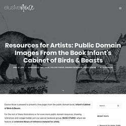 Resources for Artists: Public Domain Images From the Book Infant's Cabinet of Birds & Beasts - elusivemu.se