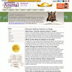Chronic Kidney Failure in Dogs