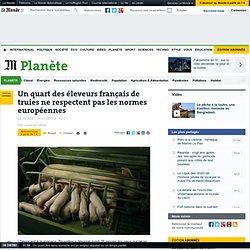 Un quart des éleveurs français de truies ne respectent pas les normes européennes