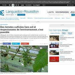 Des tomates cultivées hors sol et respectueuses de l'environnement, c'est possible - France 3 Languedoc-Roussillon