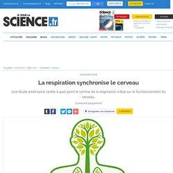 La respiration synchronise le cerveau