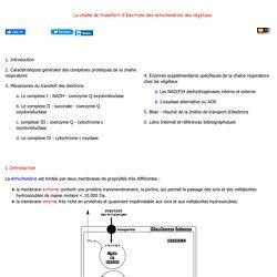 Chaine respiratoire transfert electron Respiration mitochondrie physiologie vegetale Cours Enseignement et recherche Biochimie Emmanuel Jaspard Universite Angers