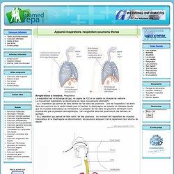 Appareil respiratoire, respiration poumons thorax