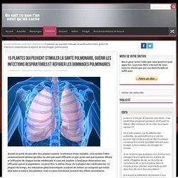 15 plantes qui peuvent stimuler la santé pulmonaire, guérir les infections respiratoires et réparer les dommages pulmonaires