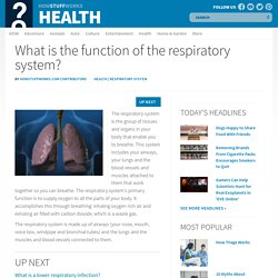 What is the function of the respiratory system?