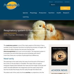 Respiratory system & thermoregulation - Poultry Hub