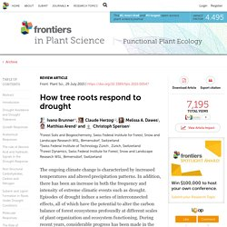 How tree roots respond to drought