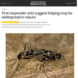 First-responder ants suggest helping may be widespread in nature
