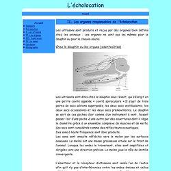 II- Les organes responsables de l'écholocation