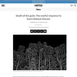 Death of the gods: The woeful response to kauri dieback disease - Metro