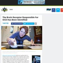 The Brain Receptor Responsible For OCD Has Been Identified