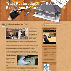 Trust Restoration Inc - Restoration Excellence Ensured: Got Mold? Go For The Pros!