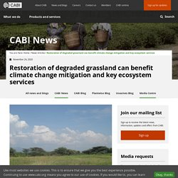 Restoration of degraded grassland can benefit climate change mitigation and key ecosystem services - CABI.org