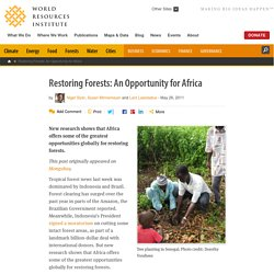 Restoring Forests: An Opportunity for Africa