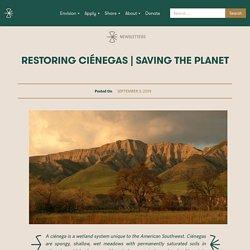 Saving the Planet – Schumacher Center for New Economics
