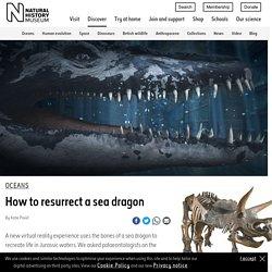 How to resurrect a sea dragon