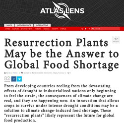 Resurrection Plants May be the Answer to Global Food Shortage