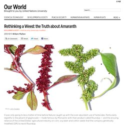 Rethinking a Weed: the Truth about Amaranth