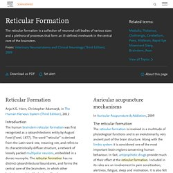 Reticular Formation - an overview