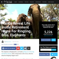 Photos Reveal Life Inside Retirement Home For Ringling Bros. Elephants