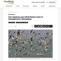 Ces espèces qui rétrécissent avec le changement climatique - GoodPlanet mag'