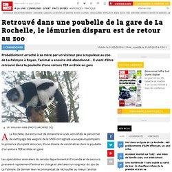 Retrouvé dans une poubelle de la gare de La Rochelle, le lémurie